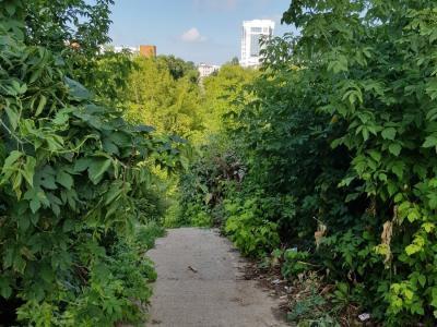 Пешеходная дорожка среди зелени