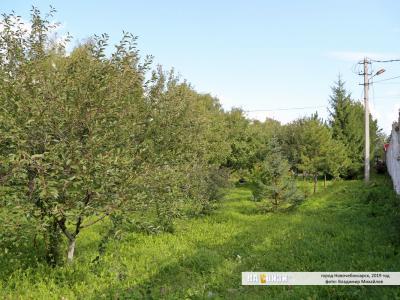 Фруктовый сад в Ельниково