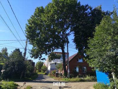 Дерево на улице Полярная