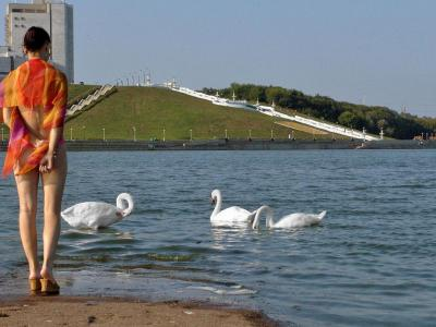 Девушка и лебеди