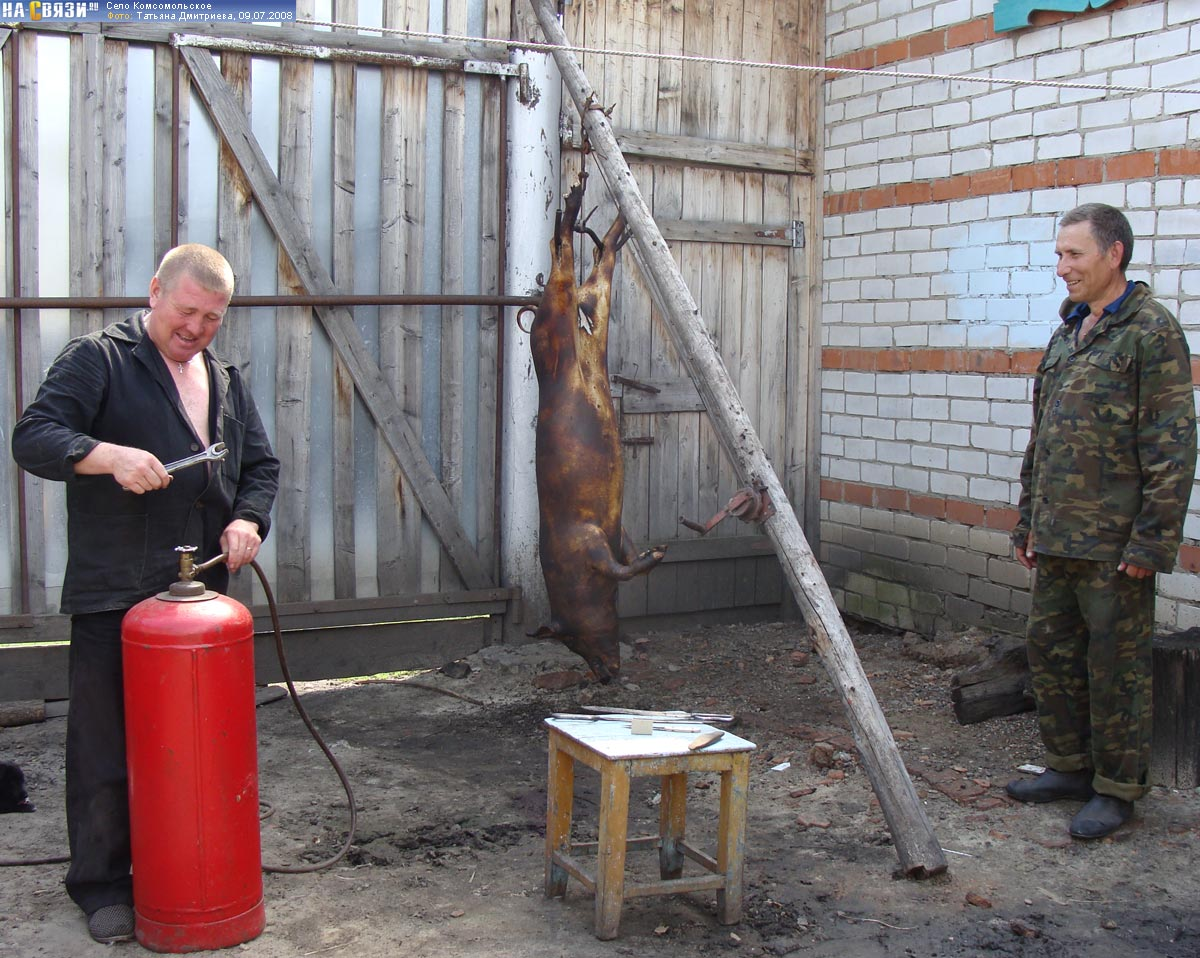 Опаливания свиней своими руками 231
