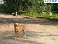 Собаки на улице Дегтярева