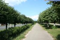 Пешеходная аллея по улице Гагарина