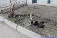 Кошки на ул. Хевешская