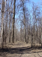Весенний лакреевский лес
