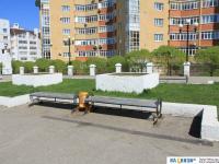 Скамейки на бульваре Денисова