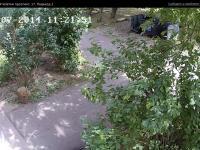 Сервис городских видеокамер от Инфолинк (камера cam8837)
