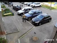 Сервис городских видеокамер от Инфолинк (камера cam9499)