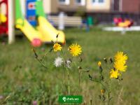 Цветы на детской площадке