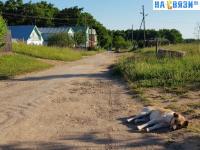 Хатико Южного поселка