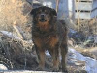 "Собака охранник на стройке Позиция 3 микрорайона ""Кувшинка"""