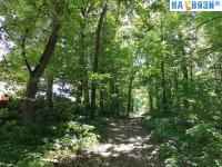 Дорога по лесу мимо промзоны
