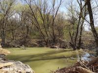 Зеленоватый пруд