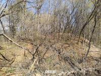 Кусочек леса