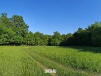 Поляна в Бауманском лесу