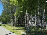 Деревья в сквере