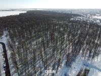 Вид сверху на Бауманский лес зимой