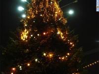 Новогодняя ёлка на заливе