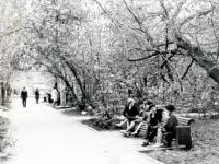 Аллея в парке им. Крупской. 1979 г.
